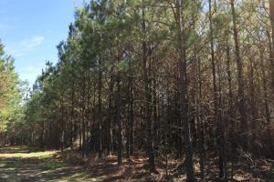 land for sale in al, recreational land for sale in al, development land for sale in al (9 of 11)