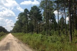 Manning Recreational and Hunting Estate - Clarendon County SC