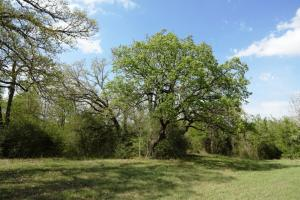 Large Oak Trees, Beautiful Hay Meadow, New Fence and Water Well - Madison County TX