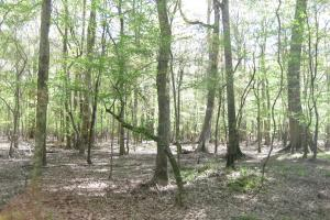 Pea River Recreational Tract/ Cabin - Barbour County AL