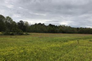 Great Home Site or Pasture Land - Attala County MS
