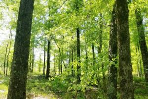 Big Swamp Creek Hunting and Timber Investment in Lowndes, AL (12 of 13)
