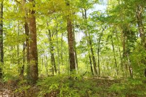 Big Swamp Creek Hunting and Timber Investment in Lowndes, AL (7 of 13)