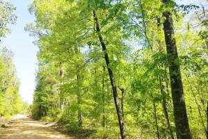 Big Swamp Creek Hunting and Timber Investment in Lowndes, AL (10 of 13)
