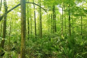 Big Swamp Creek Hunting and Timber Investment - Lowndes County AL