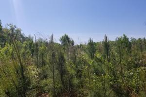 Big Swamp Creek Hunting and Timber Investment in Lowndes, AL (6 of 13)