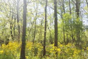 Big Swamp Creek Hunting and Timber Investment in Lowndes, AL (8 of 13)
