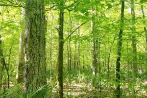 Big Swamp Creek Hunting and Timber Investment in Lowndes, AL (2 of 13)