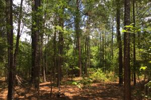 Old Georgetown Road Wooded Homesite - Kershaw County SC