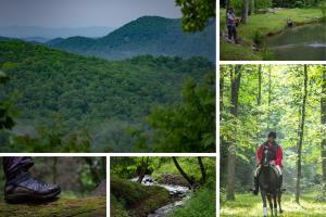 Black Mountain 337 +/- Acre Wilderness Retreat - Buncombe County, NC