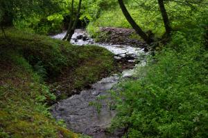 <p>Sand Brach Creek begins on the property and flows for more than a mile through the property</p>