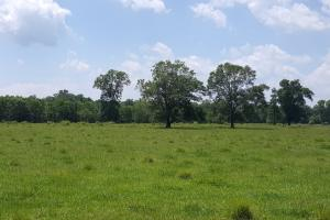 88 acre Ranch/Recreational/Hunting Tract in San Jacinto, TX (22 of 45)