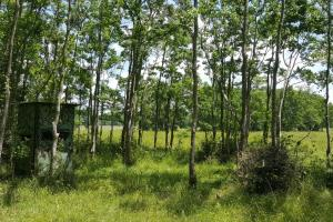 88 acre Ranch/Recreational/Hunting Tract in San Jacinto, TX (27 of 45)