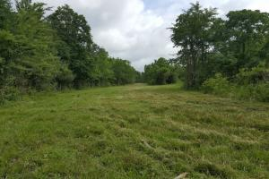 88 acre Ranch/Recreational/Hunting Tract in San Jacinto, TX (23 of 45)