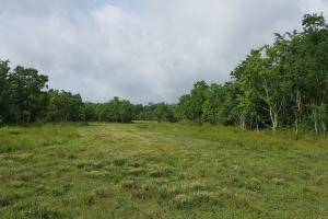 88 acre Ranch/Recreational/Hunting Tract in San Jacinto, TX (10 of 45)