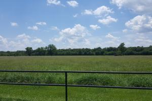 88 acre Ranch/Recreational/Hunting Tract in San Jacinto, TX (37 of 45)