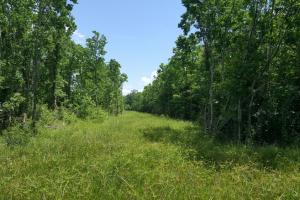 88 acre Ranch/Recreational/Hunting Tract in San Jacinto, TX (17 of 45)