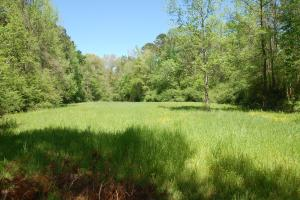 Wildlife Food Plot (8 of 16)