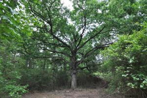 50 AC WOODED PARADISE NEAR THE WOODLANDS / WOODFOREST in Montgomery, TX (3 of 17)