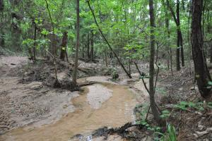 50 AC WOODED PARADISE NEAR THE WOODLANDS / WOODFOREST in Montgomery, TX (2 of 17)