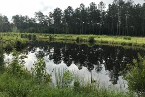 Vandross Bay Hunting Retreat  - Georgetown County SC