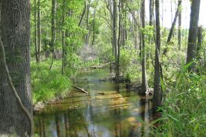 North Fork Edisto River Steedman Community - Lexington County SC