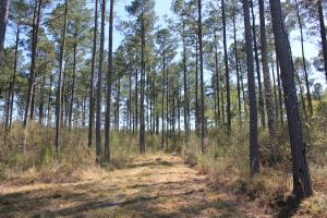 Shulerville 59 Acres - Berkeley County SC