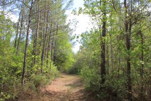 Shulerville 45 Acres - Berkeley County SC