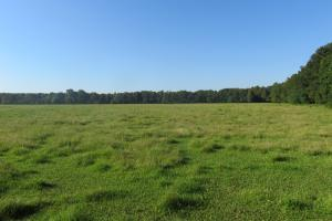 Paw Paw's Pasture and Woods - Hinds County MS