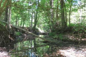 Seasonal drainage crossing tract. Tributary to Wateree Creek upstream. (6 of 33)