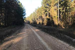 Airbase Road Hunting and Timber Investment - Noxubee County MS