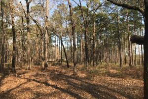 Miller Creek Conecuh NF Hunting Tract - Escambia County AL