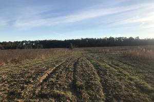 Buck Haven Farmland tract - Escambia County AL