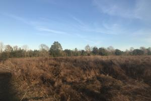 Trophy Ridge Ag, Timber, & Hunting  - Escambia County AL