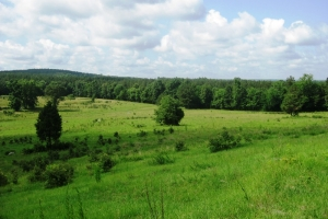 Agricultural and Recreational Tract - Fairfield County SC