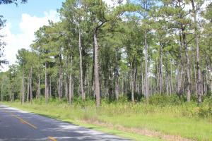 Shulerville Farm and Timber Investment - Berkeley County, SC