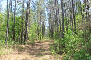 Shulerville 42 Acres - Berkeley County SC