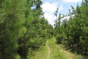 Hunting and Timber Investment in De Kalb - Kemper County MS
