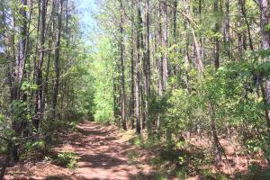 Black Creek 9 Acres - Berkeley County SC