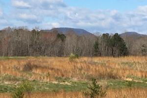 Landrum Pastureland with Creek & Hardwoods - Spartanburg County SC