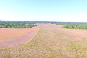 Evergreen Hunting and Farm Land - Columbus County NC