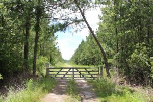 283 Acres Timber Investment