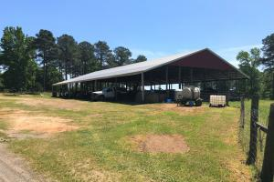 GD Smith Cattle Farm in Laurens, SC (50 of 82)