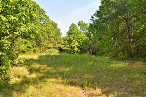 Alta Recreation and Timber Investment Property - Fayette County AL