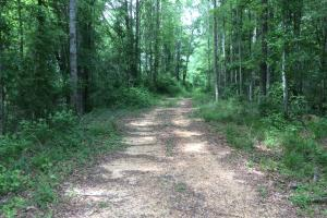 Hatchapaloo Timber Tract - Smith County MS