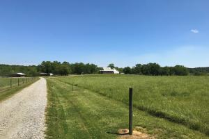 Smith-Heffner Cattle Farm in Laurens, SC (15 of 97)