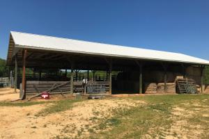 Smith-Heffner Cattle Farm in Laurens, SC (59 of 97)