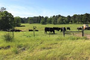 Smith-Heffner Cattle Farm in Laurens, SC (70 of 97)