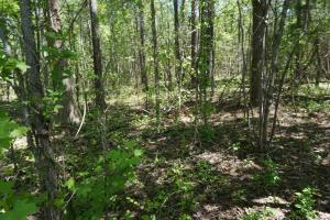 Jemison Hunting and Weekend Getaway - Chilton County AL