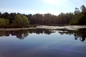 Hunting & Timber Investment with Pond  - Orangeburg County SC
